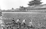 老照片:圖1童工礦工在拉煤,圖5百年前的長城滿是荒草無人打理!