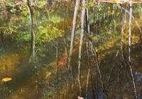 水中秋色,寫滿了秋殤