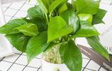 家裡要養綠植這6種最好,隨便一養就能夠爆盆,不養一盆可惜了