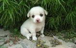 寵物,我家的幾隻萌寵,狗狗,貓咪,可愛極了