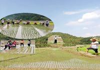 積極開展冷涼山區粳稻優良品種展示試驗