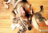 自從二哈撿了只小貓回家後,這母愛氾濫也是沒誰了!
