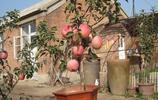 水果養花不如養水果,這8種水果盆栽,讓你水果四季輪流吃