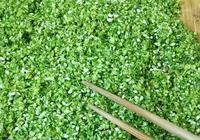 傳統農家韭花醬,不放姜不放蒜,1個月就能吃,特香特美的開胃菜