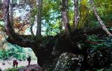 炎陵縣遊記:神農谷國家森林公園