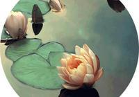 悟禪心語:心中的菩提花