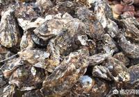 海蠣子和生蠔的區別是什麼?很多人說海蠣子就是生蠔,對嗎?