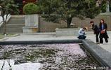 風陣陣花飄落,大雁塔景區水裡葬花,遊人直呼太美了
