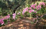 鬧中取靜,青島山頭公園不少,這座位於西部老城區,適合約會
