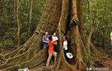 您沒見過的海南熱帶雨林奇觀請欣賞