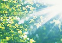 心若有陽光,這世界便有陽光——張高赫