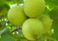 愛吃堅果也得會吃堅果!堅果的食用禁忌和功效你知道幾個