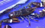 市民買龍蝦和螃蟹 兩隻龍蝦花了三百多元 他直搖頭 說吃不起
