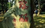 神奇的公園!瑞麗獨樹成林