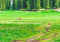 夏天的新疆是攝影師的天堂,一半花海,一半美女