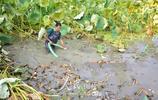 江西金溪:特色種養助增收