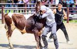 歐洲的摔跤冠軍來中國和牛摔跤