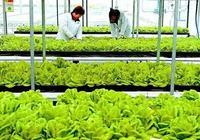 鄉村振興應重點研究關注的9類鄉村產業