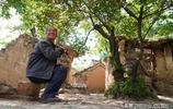 76歲農村老人守護68歲野生櫻桃樹不離開,他擔心1件事