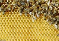 工蜂產卵的識別 !工產的快速處理方法!