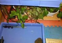 家裡養龜的整體環境(水,半水,陸龜)