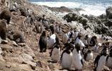 墨爾本企鵝島,企鵝的天堂
