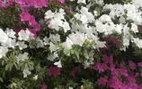 花開三月春
