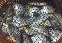 釣魚技巧:用過魚護後,裡面有難聞的味道如何處理