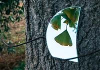 心理學:憑直覺選一塊破碎的鏡子?測你和前任會不會複合