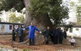 村民拿70萬保護千年古樟樹,多次雷擊和火災已空心,依舊枝繁葉茂