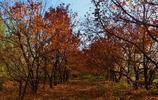 秋之韻紅紅火火 美了中條山 醉了黃河岸