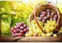 葡萄的作用