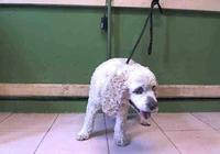 20歲的老壽星狗被主人趕出家門,嫌棄它是個老糊塗