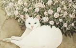 花火站點:貓