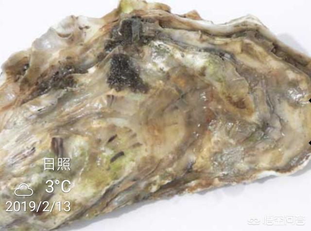牡蠣怎麼做好吃?