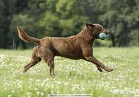 想馴養一隻能聽指揮,可以護主的犬,怎麼做?