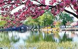 又到了櫻花盛開季節,我們該何去何從?這些地方你值得擁有