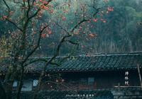 """國內旅遊:寧波""""四明山""""——中國第一紅楓之鄉"""