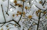 北京延慶春雪