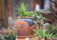 七絕:盆裡小草