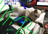 主人在電腦前放倒刺防止喵星人搗亂,結果遭到貓咪瘋狂報復