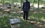 81歲爺爺養了一輩子土蜂,1斤蜂蜜才賣39塊錢,全是手工搖出來的