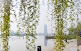 實拍:青島膠州少海國家溼地公園,總面積612.5公頃