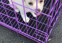 流浪小奶狗被說是土狗,出了寵物醫院丟垃圾桶頭也不回