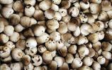 草菇味道鮮美