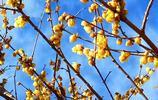 10張照片告訴你貴州關嶺新鋪的這些鮮花已經盛開!春天悄悄來臨!