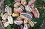 農村的庭院陽臺別傻空著,栽幾顆新型果苗,結的果全家人都吃不完