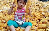 週末回老家 外孫女在豐收的玉米堆上玩耍 今年玉米豐收能增收嗎?