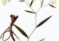 《封神演義》神農紫芝崖的仙草為何物?