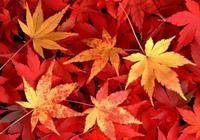 美麗又暖心的紅楓葉妝,最適合這個季節啦!